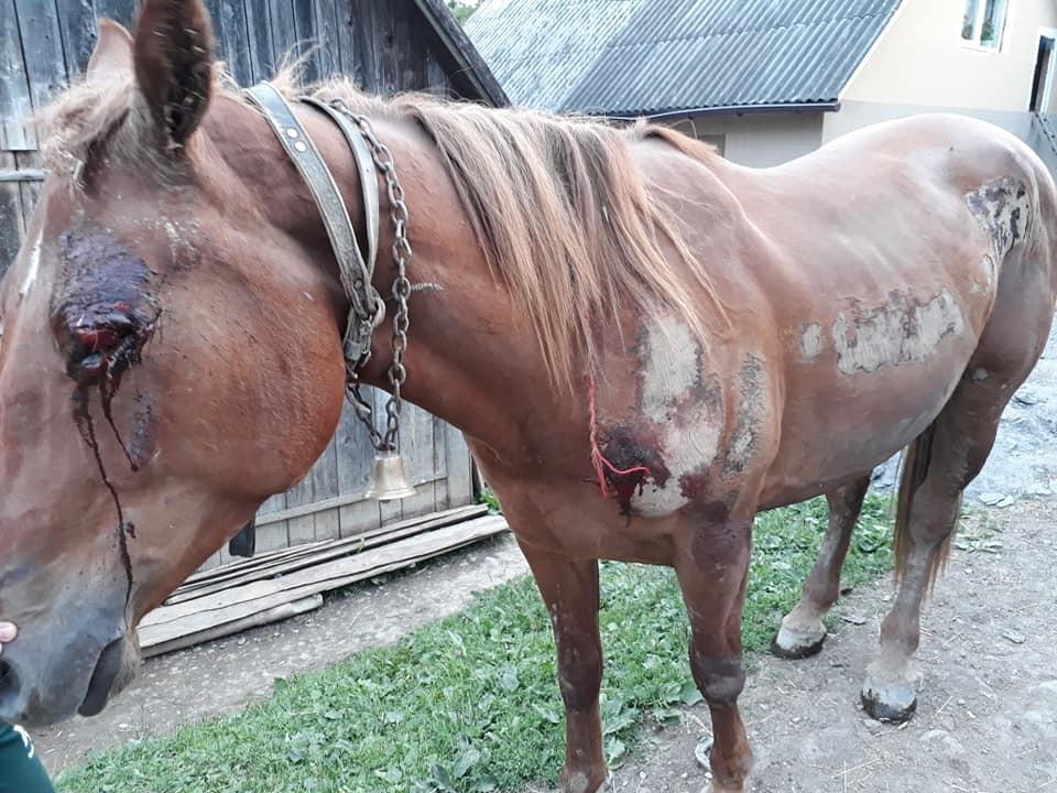 На Закарпатті п'яний екс-помічник лісничого тягав прив'язаного до УАЗу коня по асфальту (фото 18+)