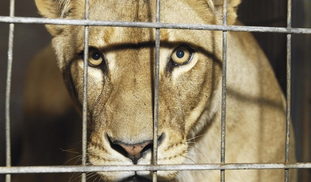 цирк тварини заборона
