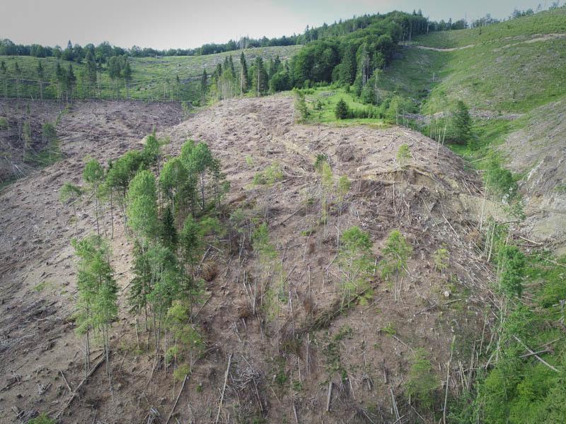 Голі Карпати: зникнення лісів показали з супутника. Масштаби трагедії вражають
