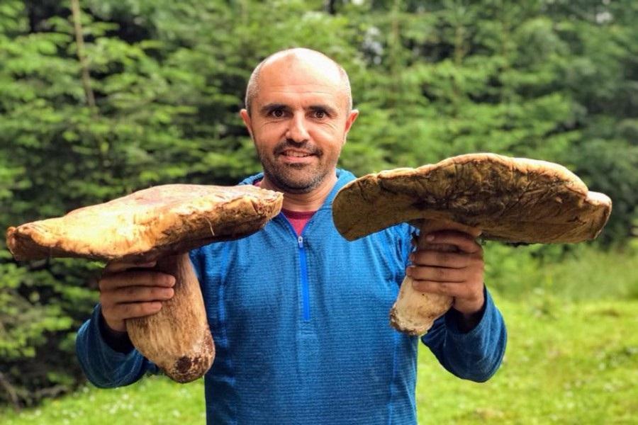 У Карпатах починають збирати гриби-велетні (фото)