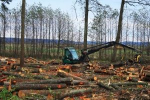 На Рівненщині викрили очолювану депутатом банду, яка розкрадала ліс