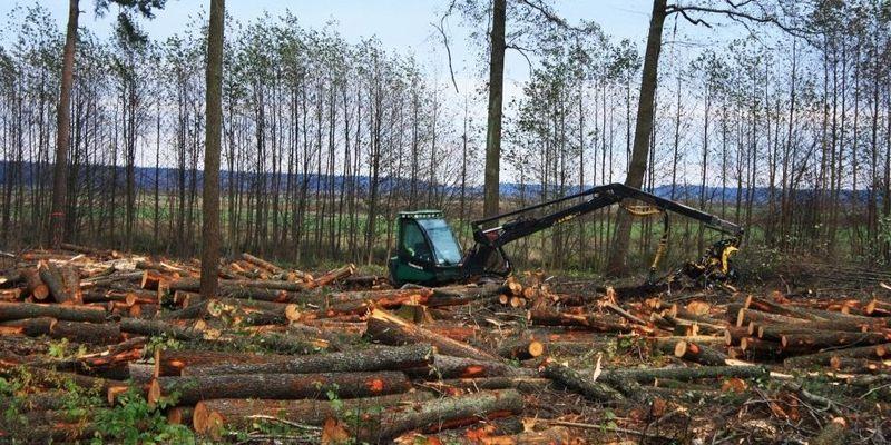 вирубка лісу лісів