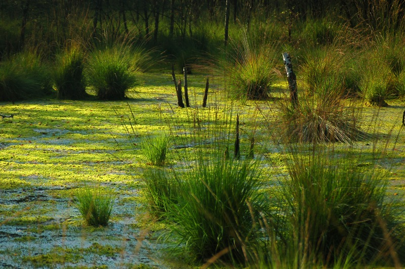 Національний природній парк «Прип'ять – Стохід»