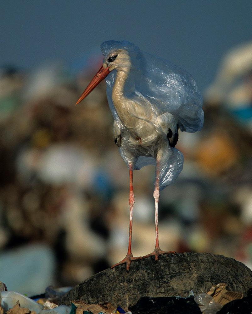 Багато хто з нас усвідомлює, що у нашому середовищі є надто багато пластику