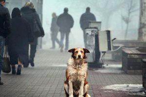 Львів'ян запрошують на благодійний ярмарок для збору коштів тваринам