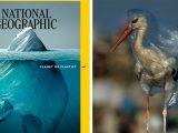 Всі аплодують новій обкладинці National Geographic, але справжній шок всередині на сторінках журналу