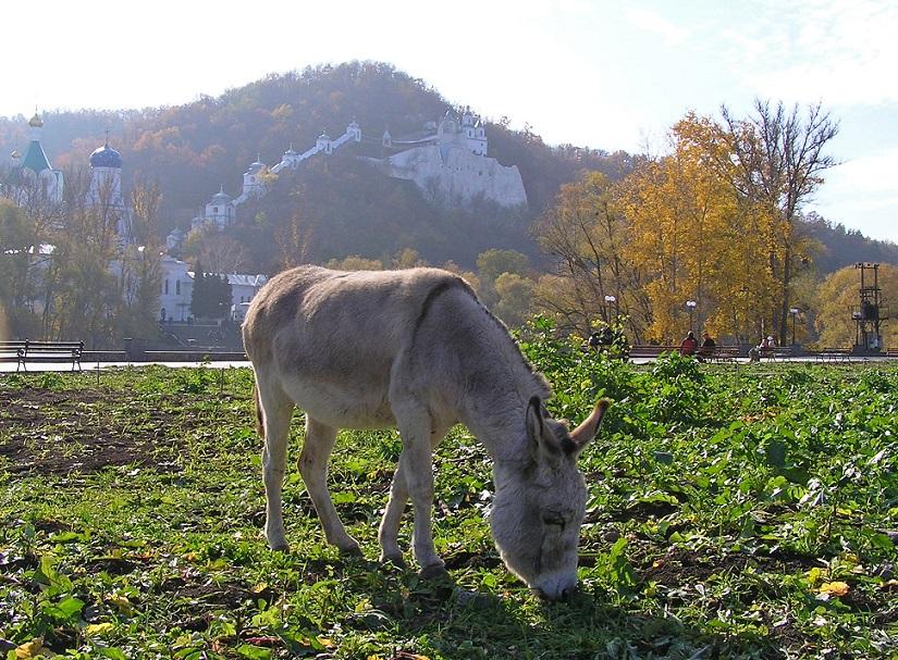 ферма у селі Заболотне