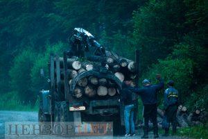 В українських Карпатах триває масове вирубування лісу-кругляка. Фотофакти