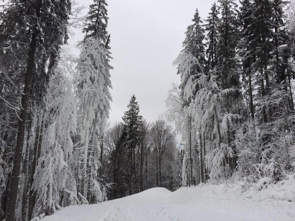 Буковель / Фото: Евгения Китаива