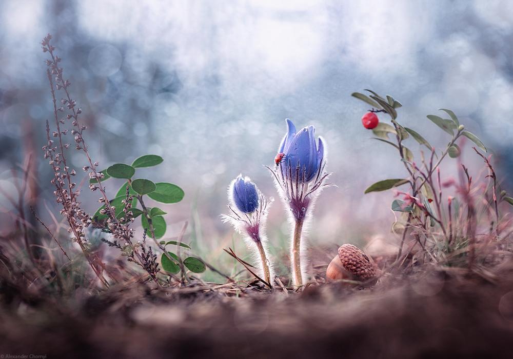 Казка – поруч! Український фотограф знімає фантастичне макро