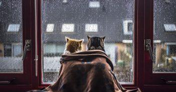дощ негода холод кіт коти кішка