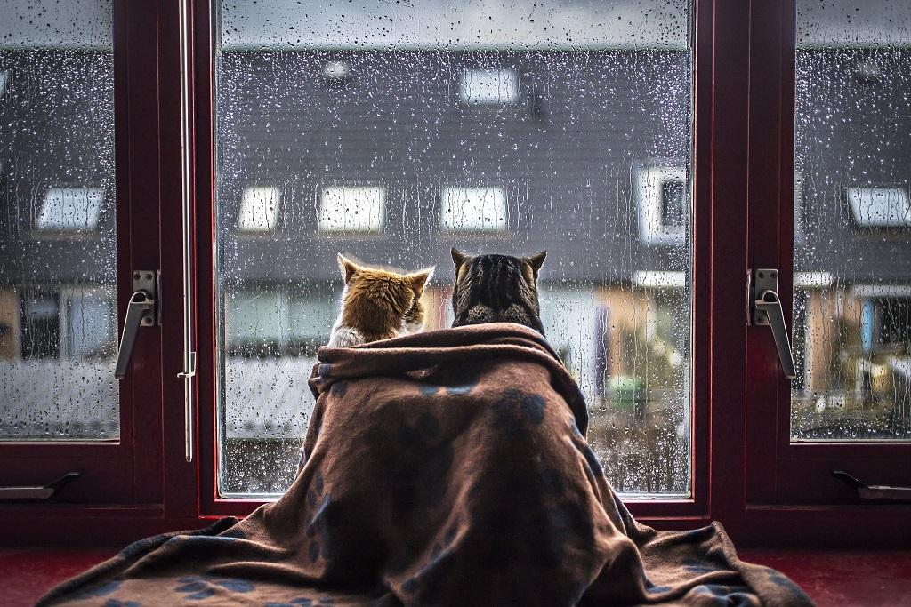 дощ негода холод кіт коти кішка | То є Львів.