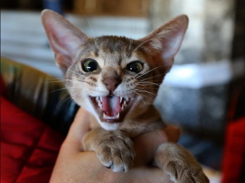 виставка котів у Львові