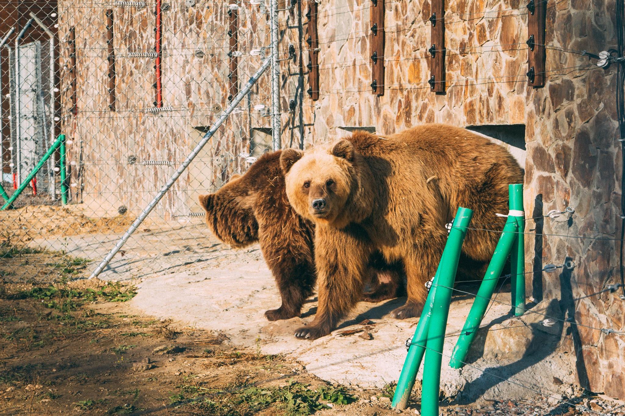 ведмідь ведмеді домажир ведмежий притулок притулок для ведмедів