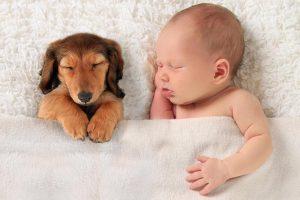 Чи шкідливі домашні тварини для дітей – пояснює Супрун