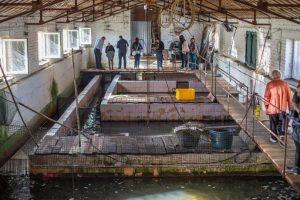 На Львівщині вперше з'явиться натуральна чорна ікра місцевого виробництва