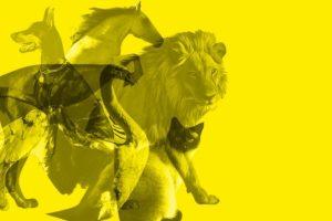 Тест: Не роздумуючи, назвіть тварину, яку ви побачили першою. І ви багато чого зрозумієте про себе