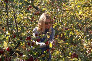 """Фермерське господарство під Львовом запрошує на акцію """"Збери яблука сам"""" (Фото)"""