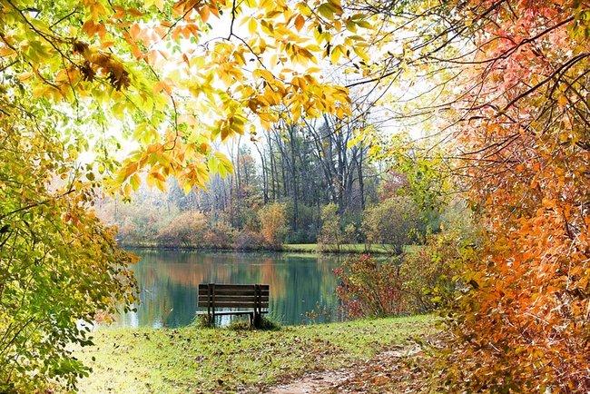 жовтень осінь