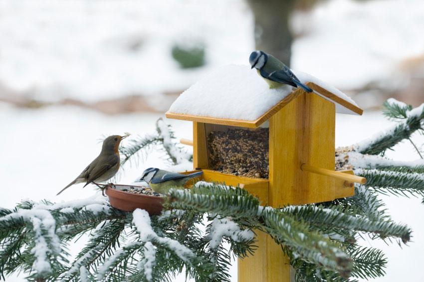 годівниця годівниці снігур пташка пташки птах