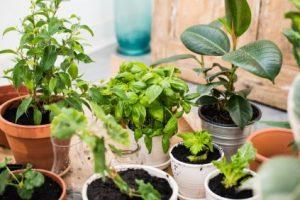 Магічні властивості домашніх рослин, або які квіти варто мати вдома