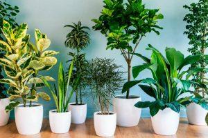 9 кімнатних рослин- талісманів, які принесуть щастя в будинок