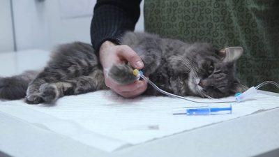За знущання над котом підліткам-львів'янам загрожує до трьох років ув'язнення