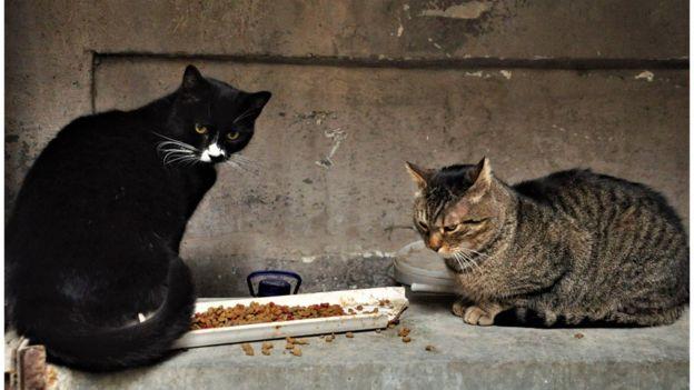 Безпритульні коти - корисні, вони ловлять щурів і мишей, кажуть захисники тварин