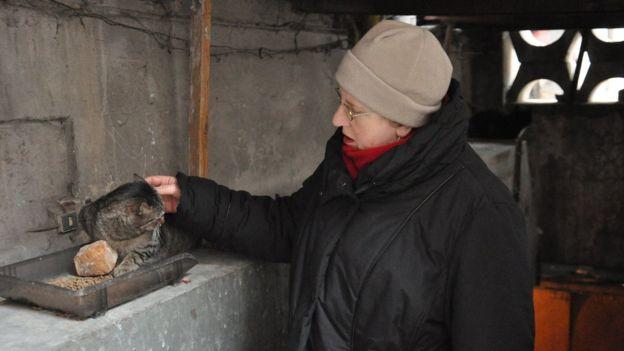 Львів'яни нерідко допомагають безпритульним котам