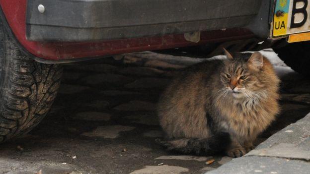 Безпритульним котам - місце в притулку, вважають деякі мешканці міста