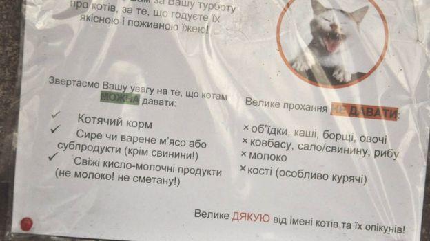 Захисники тварин також нагадують, як правильно підгодовувати котів