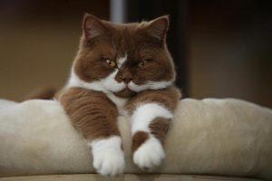 20+ фактів про психологію і характер котів