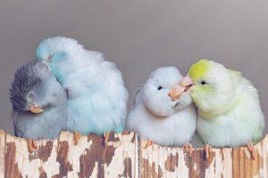 Львів'ян запрошують на виставку декоративних та співочих птахів