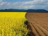 Оприлюднено текст законопроекту про ринок землі