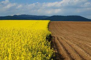 Порошенко підписав закон про земельний мораторій