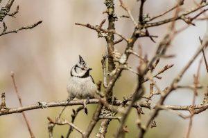 У Чорнобилі зафіксували рекордну кількість червонокнижних птахів