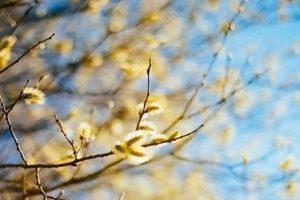 20 березня – День весняного рівнодення 2019: традиції, прикмети, заборони