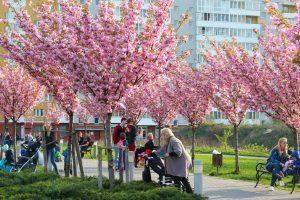 Львів потопає в цвіті. Підбірка фото з соцмереж