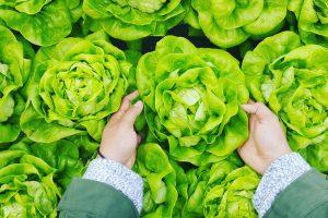 Небезпека ранніх овочів. Як правильно споживати