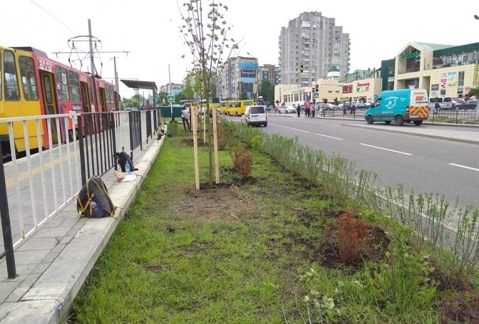 Уздовж сихівської трамвайної лінії висадили кущі та дерева. Фото