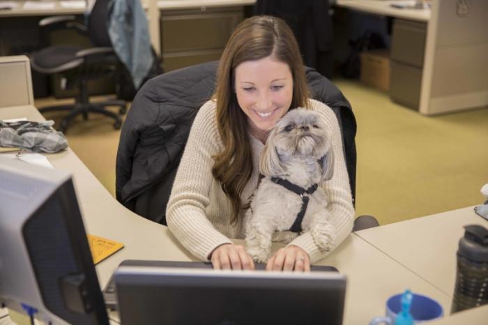 собака на роботі