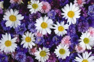 З якою квіткою асоціюються жінки різних знаків зодіаку