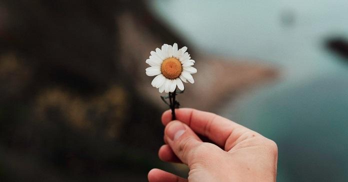 ромашка квыти щастя життя психологія