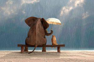 Доброта зцілює: піклуючись про щастя інших, ми знаходимо власне