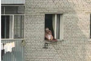 Львівська поліція знайшла бабусю, яка виставила внука у вікно