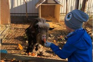 Домівка врятованих тварин у Львові потребує допомоги