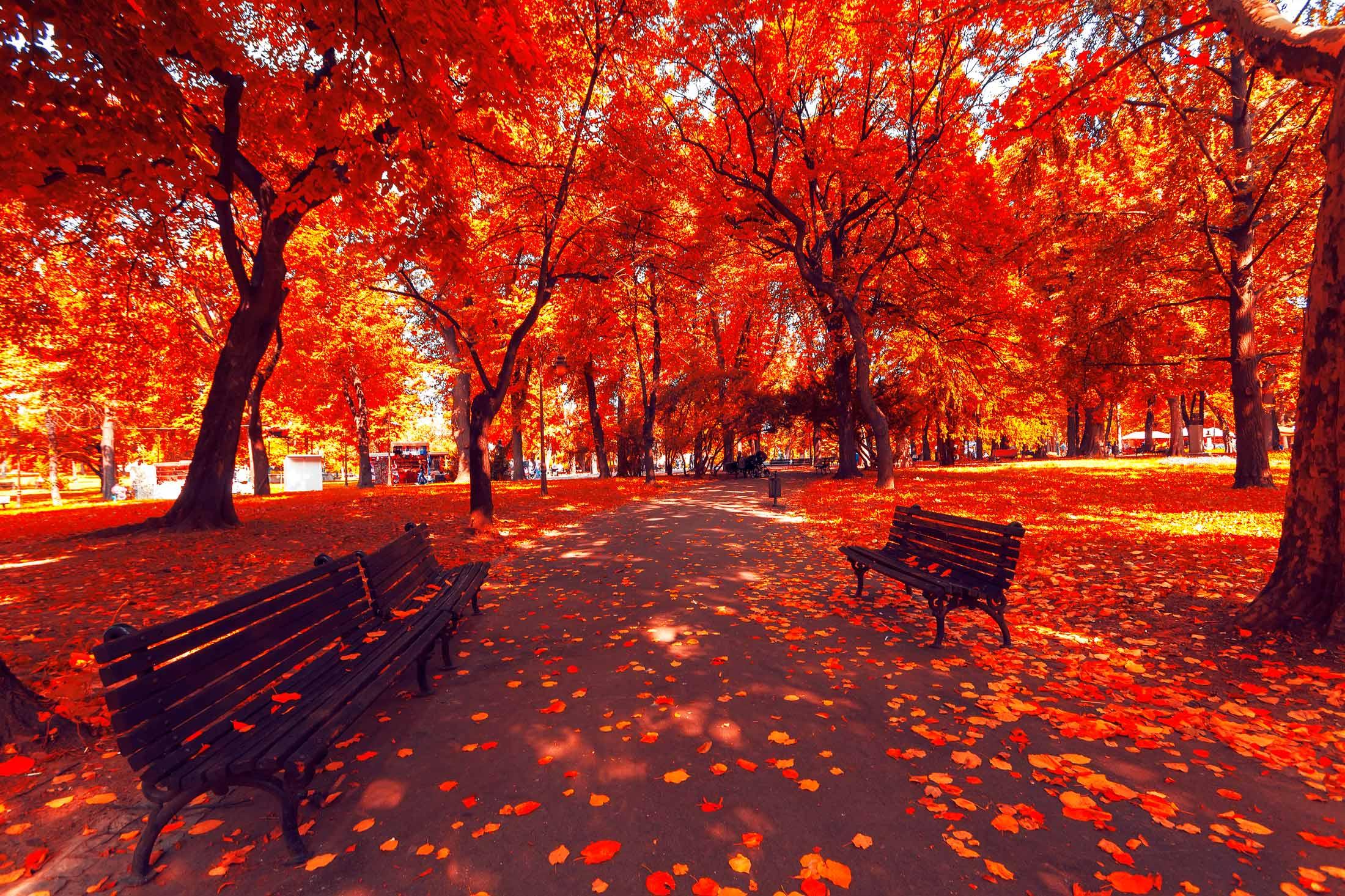 осінь жовтень листопад жовте листя