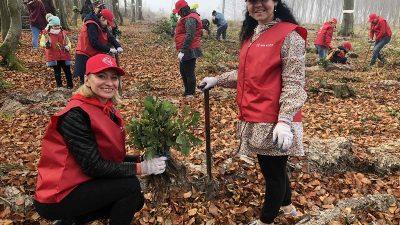 За один день у лісах на Львівщині висадили понад 88 тисяч дерев