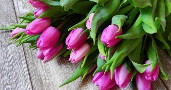 квіти 8 березня тюльпани